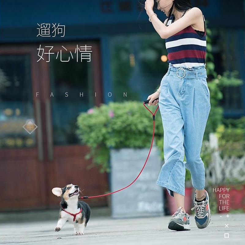 狗狗牵引绳狗链子遛狗绳项圈猫绳小型犬中型大型泰迪金毛宠物用品