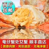 南沙顶津青蟹鲜活海鲜处女蟹奄仔蟹母螃蟹小母蟹包肥包活单价一斤