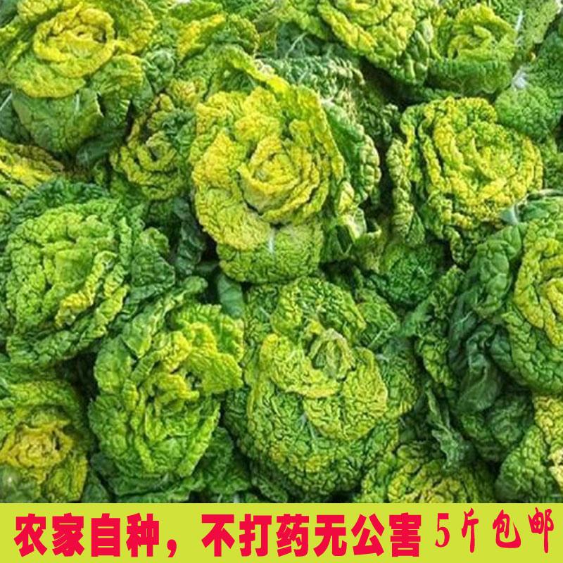 农家青菜黄窝窝黄心菜乌塌菜黄芯乌黑白菜火锅蔬菜小白菜青菜