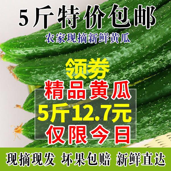 农家现摘新鲜蔬菜黄瓜纯天然应季水果黄瓜脆嫩带刺青瓜5斤装包邮
