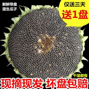 18年新鲜湿葵花盘向日葵瓜子盘籽生瓜子散装晒干原味孕妇零食带盘