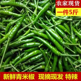 新鲜青辣椒蔬菜农家自种青小米椒超辣辣椒泡椒现摘朝天椒5斤包邮