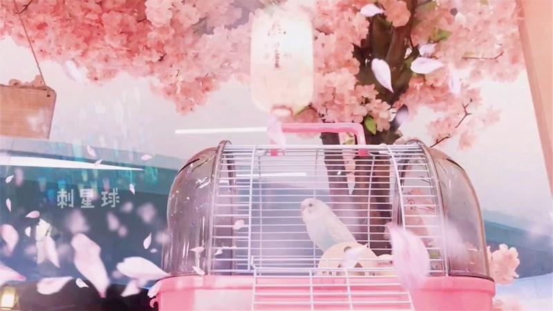 法國水晶日本品高馬卡IRIS飛寶美國PH刺猬倉鼠兔子鸚鵡手提外帶籠