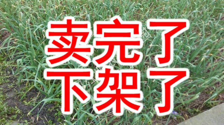 四川特产香蒜苗回锅肉青蒜苗大蒜叶绿色蔬菜有机蒜苗蔬菜四斤包邮