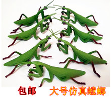 Kindergarten Cognitive Toy Teaching Aid Simulates Praying Mantis Model Plastic Wild Insect Multipodal Animal Toys