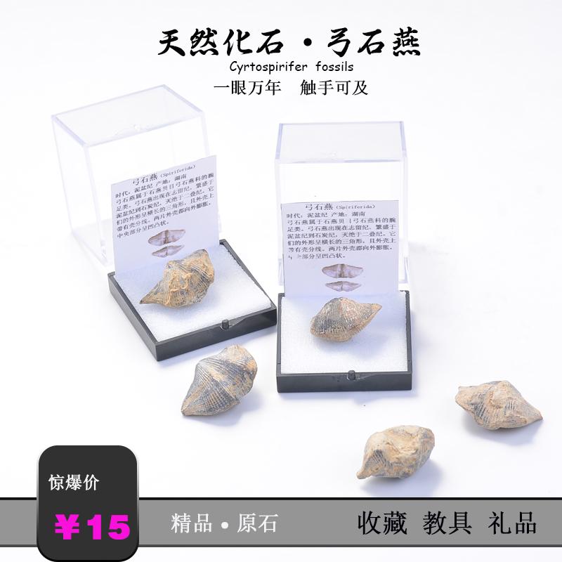 Ископаемые Артикул 594806984542