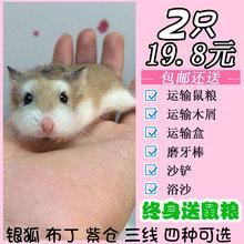 仓鼠活物奶茶仓鼠活体宠物一对情侣仓鼠宝宝奶茶鼠公主2只26.8元