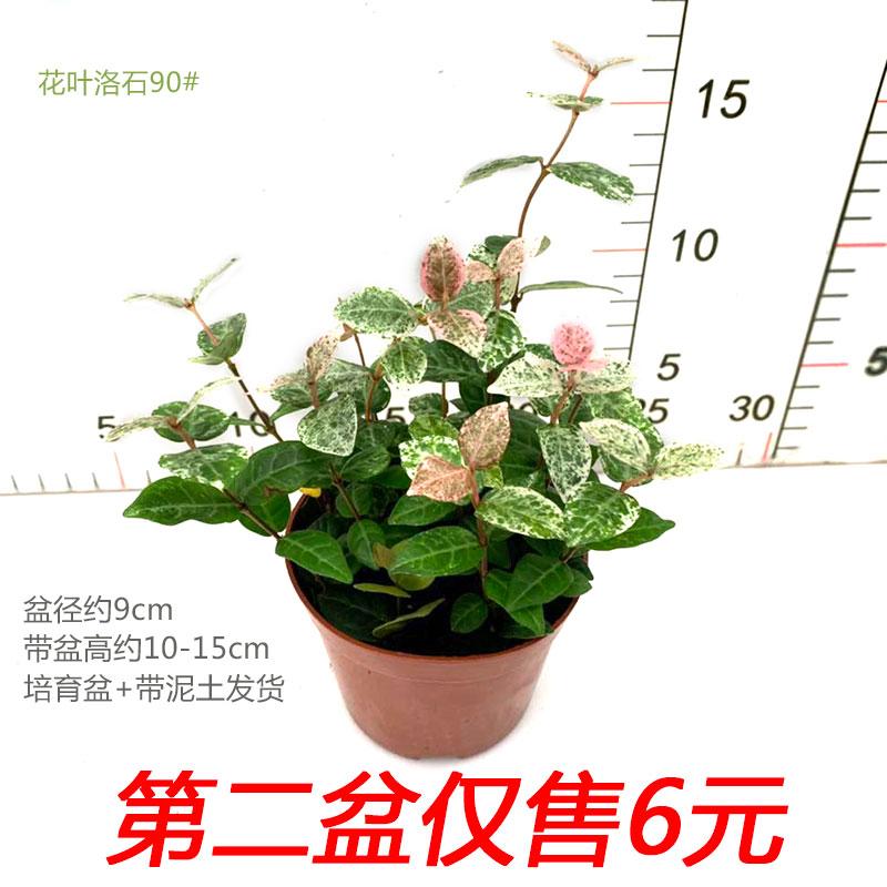 Комнатные растения Артикул 578867970509