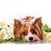 可爱小狗白玫瑰钻石绣DIY树脂方钻满钻礼品书房卧室儿童动物装饰