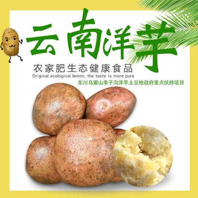 云南开花洋芋东川李子沟开花土豆农家肥生态健康食品9.6斤包邮