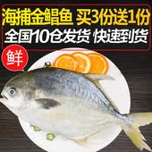 只3只送一海鲜鲜活水产金鲳鱼新鲜金昌鱼野生现捞海鲜鱼 约400克图片
