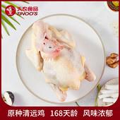 天农 山林放养走地鸡 土鸡新鲜鸡肉珍品鸡 168原种清远鸡 800g