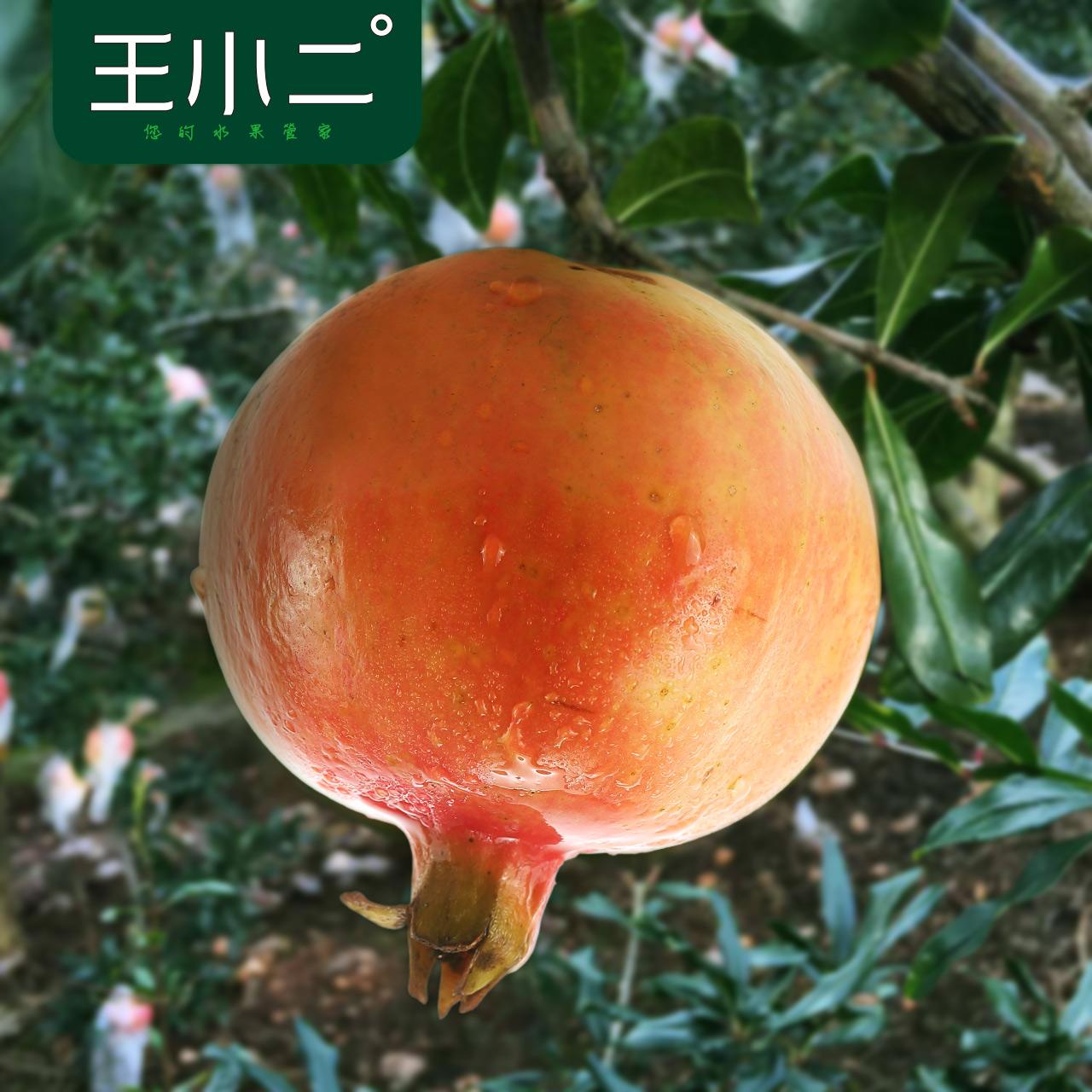 王小二 云南蒙自甜石榴 新鲜水果批发包邮当季应季时令红籽采摘