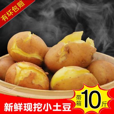 新鲜土豆云南红皮黄心土豆农家自种马铃薯小土豆洋芋带箱10斤包邮
