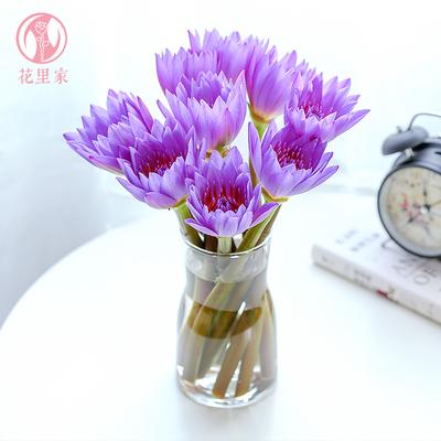 同城送花睡莲家居装饰鲜花速递水培客厅供佛莲花包月花束紫色荷花