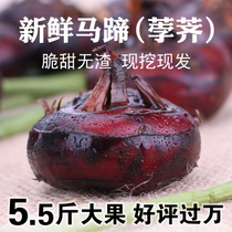 Anhui Specialty Big A fresh horseshoe water chestnut chestnut pears Farm fruit vegetables Red horseshoe fruit spot