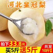 包邮 河北皇冠梨带箱10斤梨子新鲜当季水果香梨砀山酥梨 买1送1