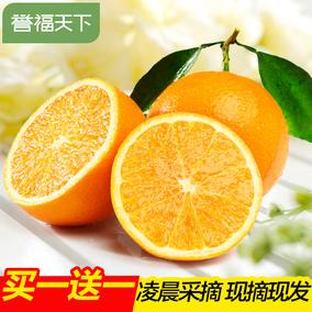 买一送一 春橙秭归伦晚脐橙 当季鲜果现摘现发新鲜水果橙子