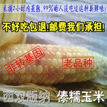 碎农家玉米粗粮杂粮玉米羹包邮250g山西特产玉米糁玉米渣玉米