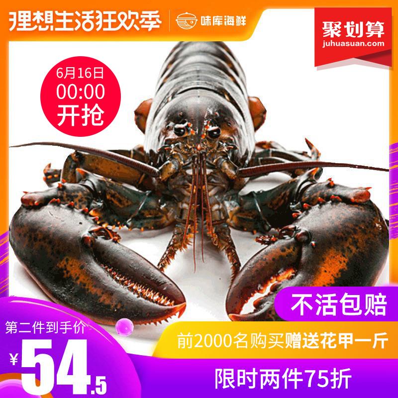 波士顿龙虾鲜活大龙虾特大波龙奥龙海鲜水产活体鲜活龙虾400-500g