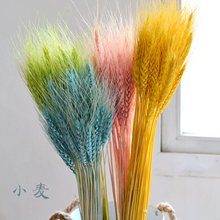 天然麦穗干花开业大麦田园装饰礼品拍摄道具干花真花麦子小麦花束