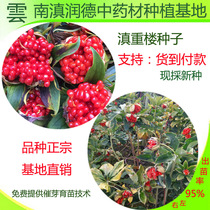 Authentic Yunnan Heavy Building seed powder Yunnan Heavy building seven leaves a flower seed Yunnan heavy Building single foot lotus seeds