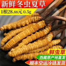 1根20根起发 西藏那曲新鲜冬虫夏草青海虫草0.5g1根无断草28.88元