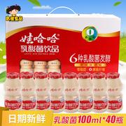 包邮娃哈哈乳酸菌饮品100ml*40瓶益生菌养乐多儿童哇哈哈饮料整箱