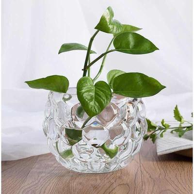 新款铜钱草植物花盆绿萝花瓶玻璃透明客厅干花插花摆件花瓶包邮