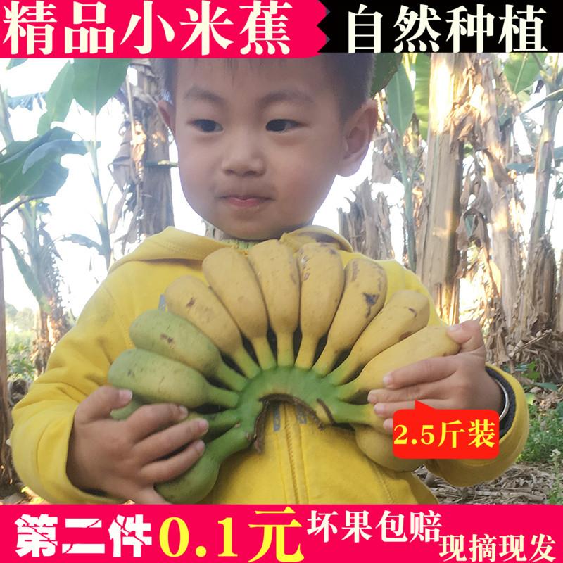 广西小米蕉鸡蕉【拍2份5斤】数量拍2份券后19.90元包邮