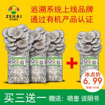 蘑菇种植包平菇菌包种蘑菇菌包食用菌菌种家庭种植盆栽蘑菇菌种子