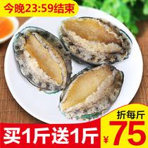 Ormeaux frais aquatiques vivants mer congelée prêts-à-manger Buddha jump chauffé en pot légume ormeau petit sauvage surdimensionné
