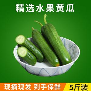 黄瓜新鲜小黄瓜水果荷兰蔬菜山东孕妇农家生吃无刺5斤包邮小青瓜