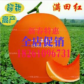 甜瓜种子满田红 红皮红肉薄皮抗病早熟 超甜香玉姑哈密瓜超甜正品