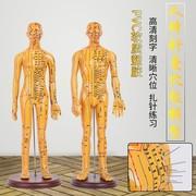 人体针灸模型经络穴位中医全身十二铜人模特图小人扎针练习小皮人