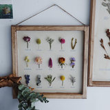 Japan imported hand-made plant specimens decorative painting flower specimens ornaments paintings wall flower specimens painting ornaments