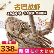 古巴龙虾大花龙虾大青龙澳洲大龙虾波龙澳龙奥龙冷冻海鲜