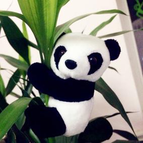 熊猫夹子毛绒玩具玩偶公仔四川成都熊猫纪念品装饰品出国礼物