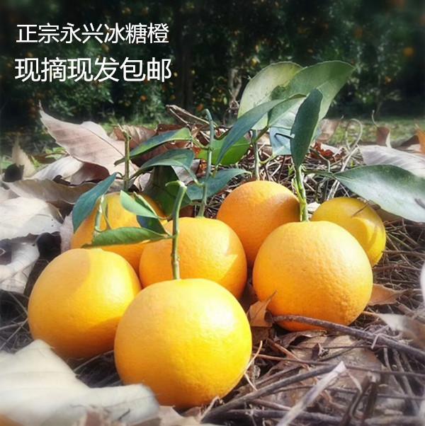 正宗永兴冰糖橙甜橙湖南橙子新鲜水果自家种植净果9斤半装包邮