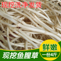Fresh Houttuynia tender root is digging ear ear to bend the root fish grass 1 parts 4 Jin