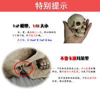1:2 art with human musculoskeletal head carving skull painting reference bust anatomy skull model art
