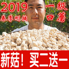 Buy two to deliver one dry goods of wild fresh mushrooms and white mushrooms in Zhangjiakou, Bashang, Inner Mongolia