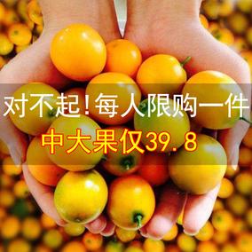 新鲜水果广西柳州融安滑皮金桔中大果三斤现摘现发非桂林脆皮金橘