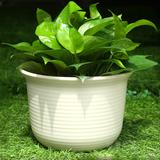 爱丽丝花盆塑料树脂加厚仿陶瓷丽思多肉绿萝壁挂阳台种菜盆栽花盆