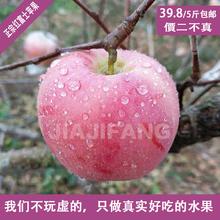 新鲜苹果水果新苹果脆甜苹果有机当季苹果洛川红富士苹果冰糖心