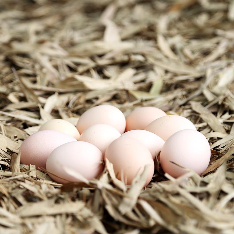 石台富硒农家野外散养土鸡蛋 农村土鸡蛋 新鲜草鸡蛋柴笨鸡蛋40枚