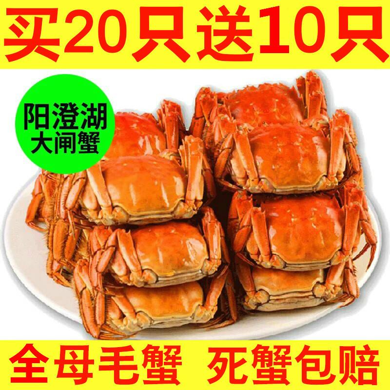 阳澄湖母螃蟹