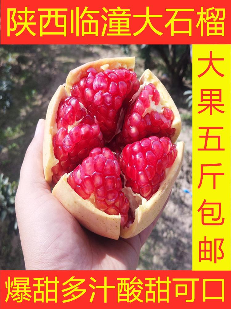 正宗临潼石榴甜石榴5斤大果现货直发新鲜水果红籽薄皮大石榴包邮