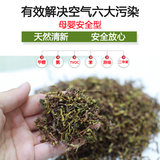 In addition to flavor tea stem formaldehyde absorption formaldehyde new house new car tea bag tieguanyin tea tea bone to flavor absorption package