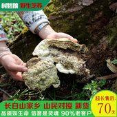 村姑娘长白山野生榆生拟层孔菌榆树灵芝真菌整枝250克传统滋补品